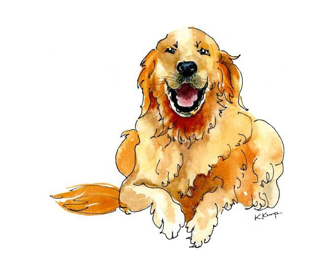 675x549 Golden Retriever Drawing Pen Amp Ink Watercolor Gift Idea Fathers
