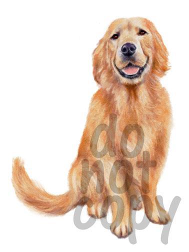 378x504 Golden Retriever Watercolor Dog