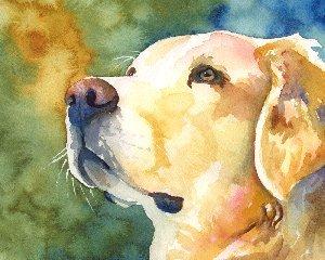 300x240 Golden Retriever Watercolor Portrait Print 030906