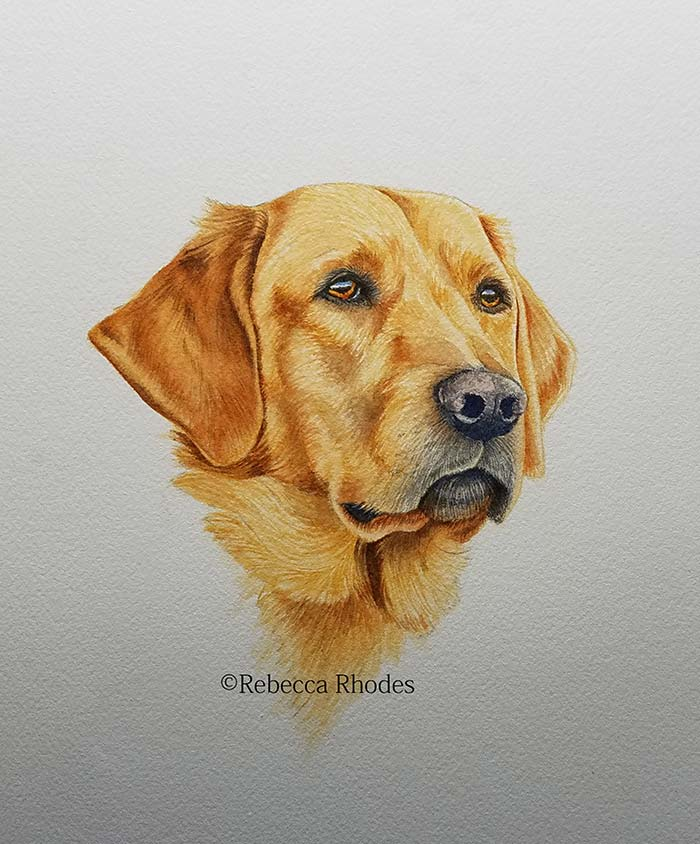 700x844 How To Paint A Golden Retriever Dog In Watercolors By Rebecca