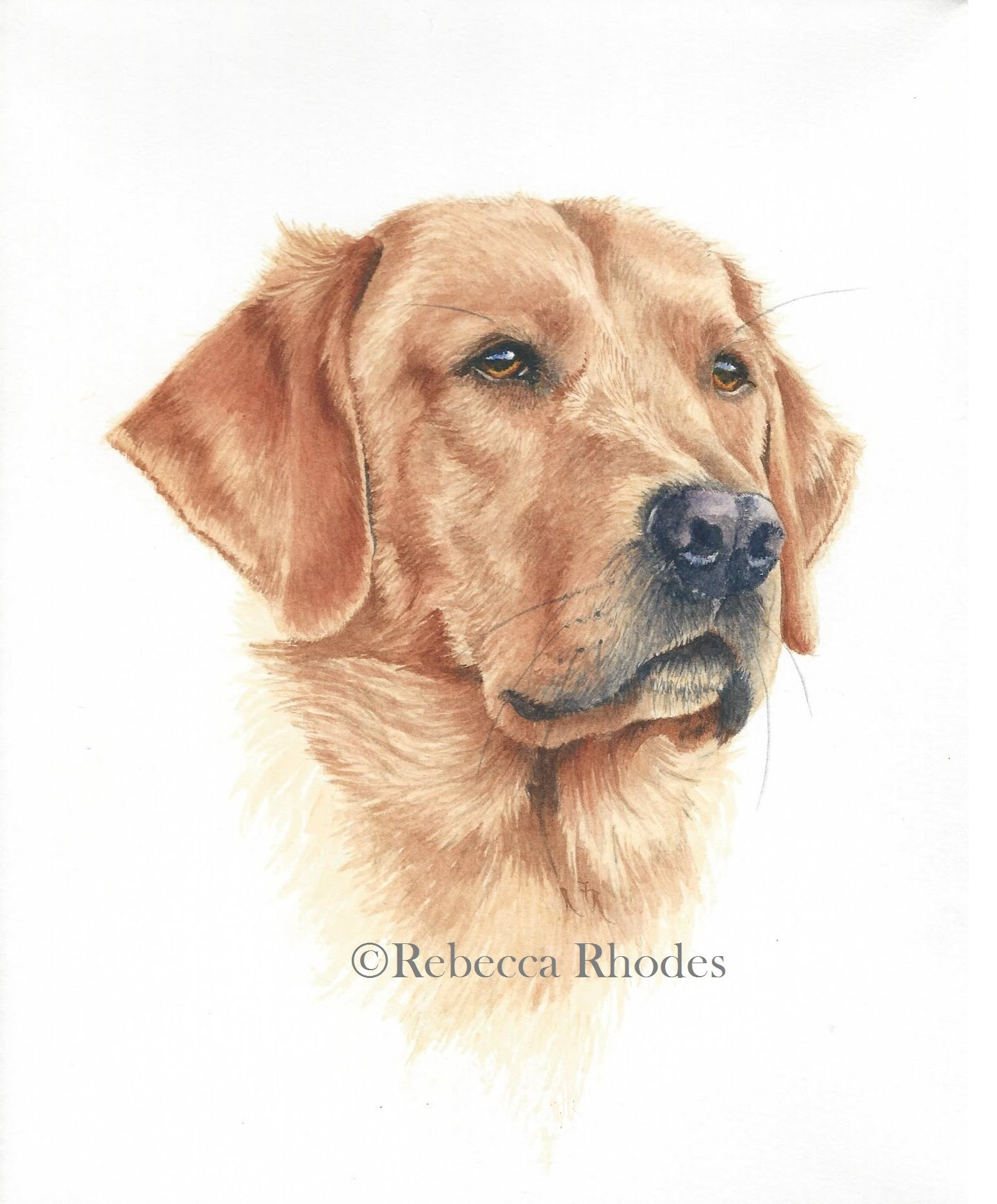1556x1880 How To Paint A Realistic Retriever Dog In Watercolor