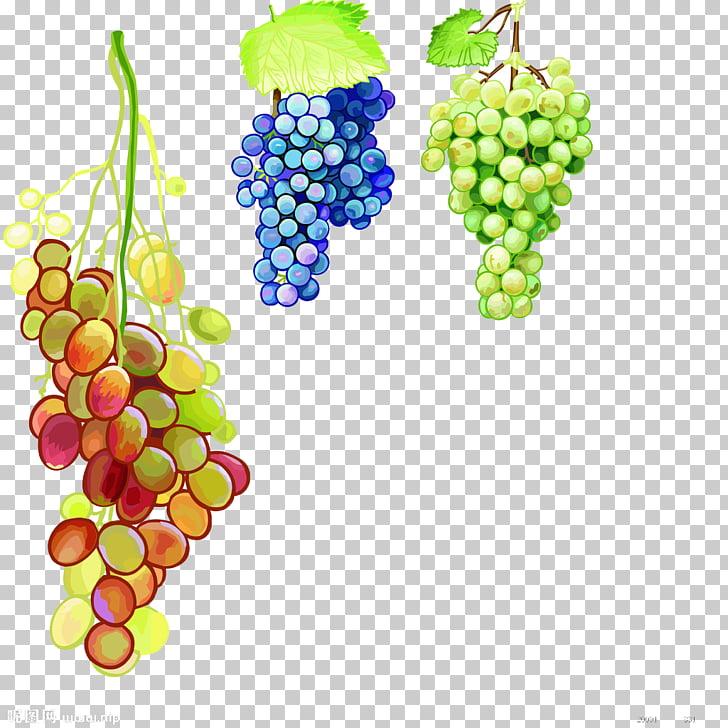 Grape Vine Watercolor At Getdrawings Com Free For Personal
