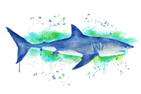 Great White Shark Watercolor