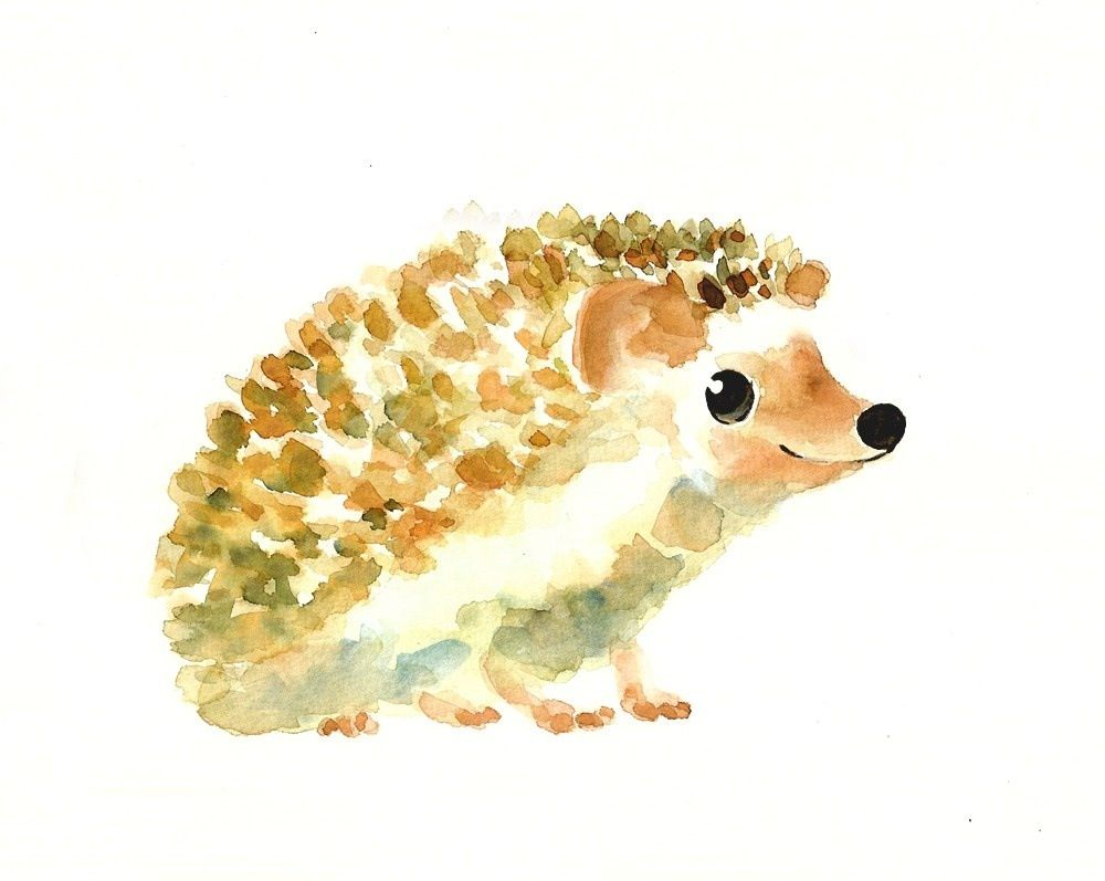 1000x797 Drawing Of A Hedgehog Pencil Sketch Hedgehogs
