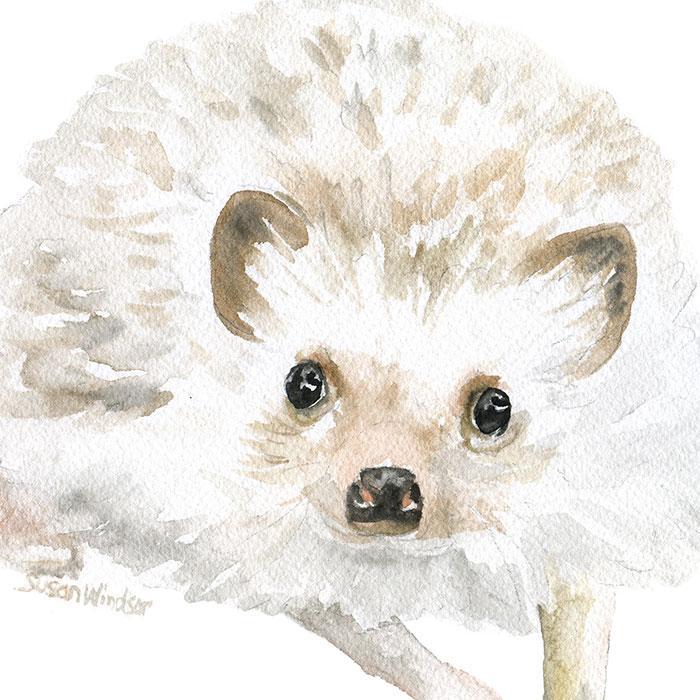 700x700 Hedgehog Original Watercolor Painting Susan Windsor