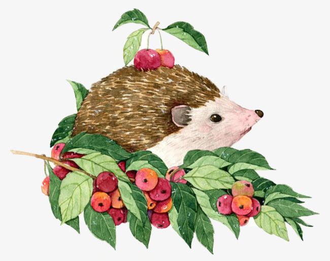 650x513 Hedgehog Watercolor, Hedgehog Clipart, Watercolor Clipart