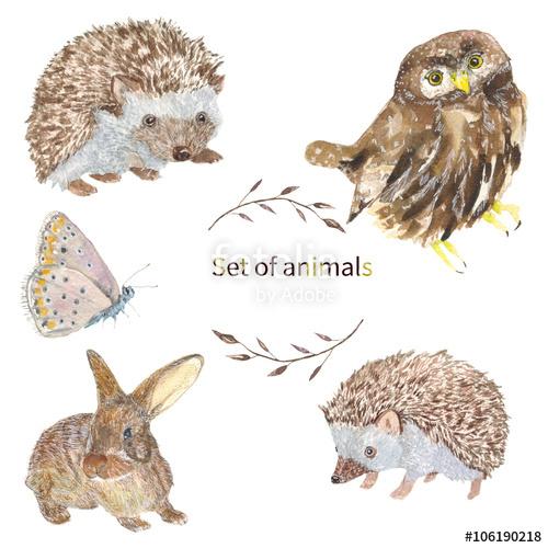 500x500 Set Of Animals. Owl, Hedgehog, Butterfly, Bunny Set Of Animals