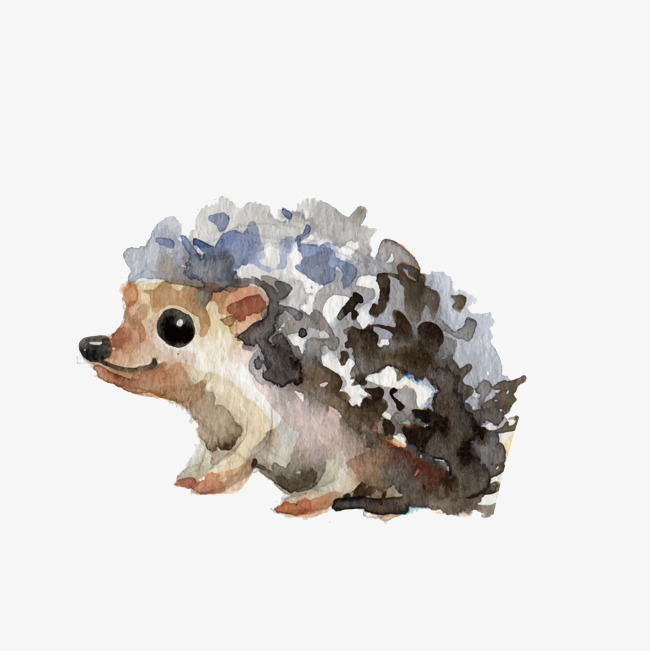 650x651 Watercolor Little Hedgehog, Vector, Watercolor, Art Png And Vector