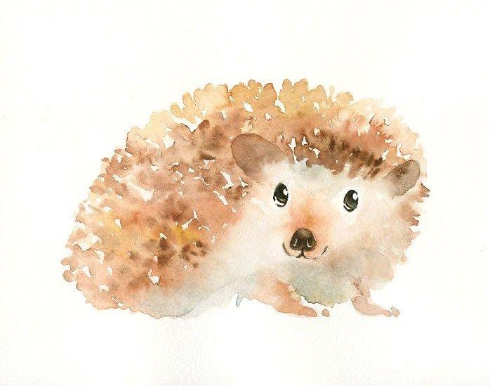 698x549 Hedgehog Painting Images Hedgehog Original Watercolor Painting