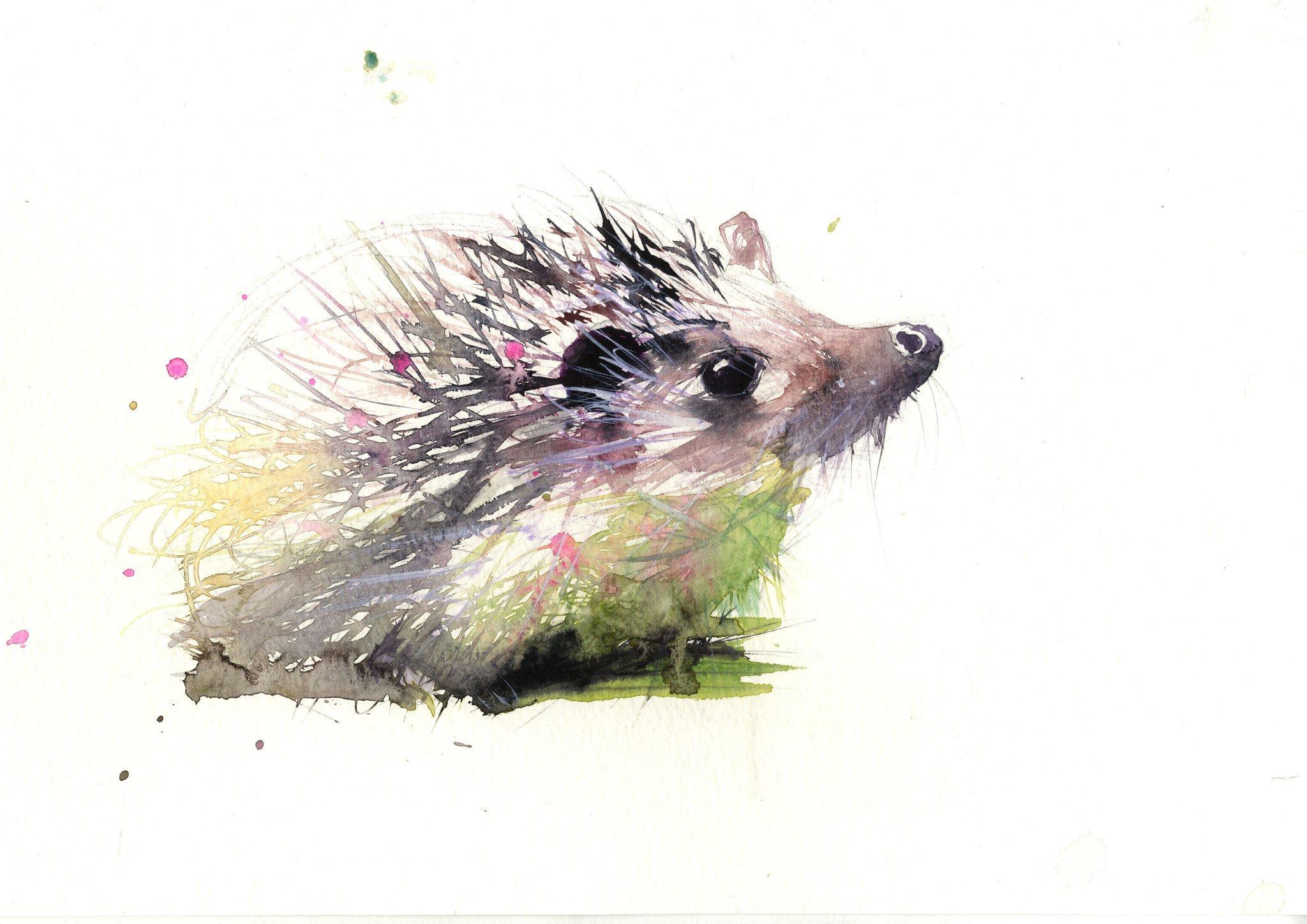 2048x1448 Limited Edition Print Hedgehog
