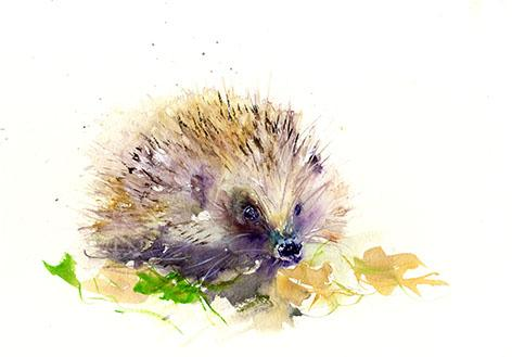 472x329 Signed Limited Edition Print Of My Original Hedgehog Watercolour