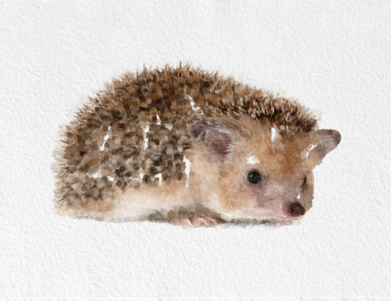 570x440 Best Hedgehog Painting Watercolor Images On Designspiration