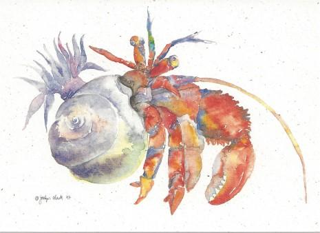 465x338 Hermit Crab Notecard Sn602 Crane Creek Graphics