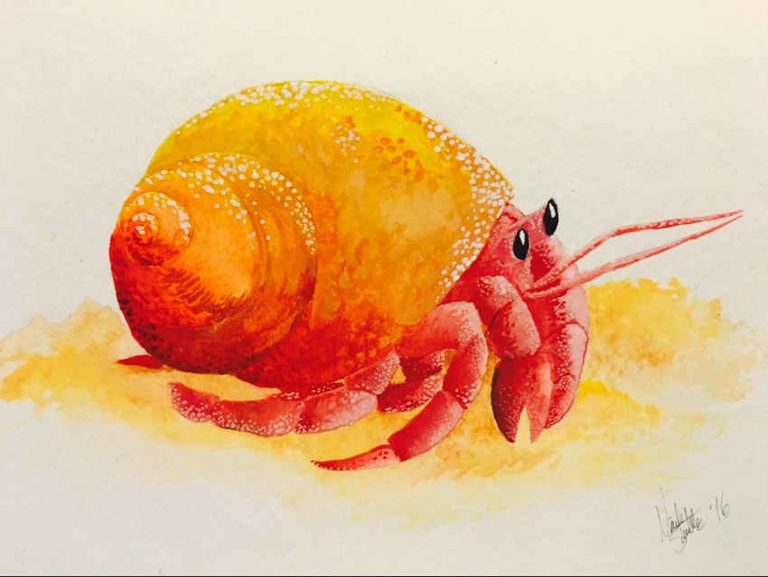 850x639 Hermit Crab Water Color By Invaderpixi