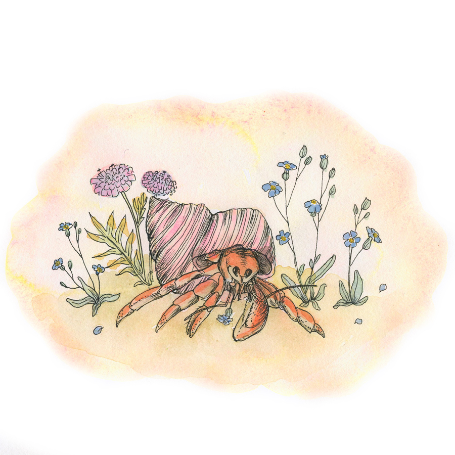 900x900 Hermit Crab Watercolor Drawing Margaret Gallagher
