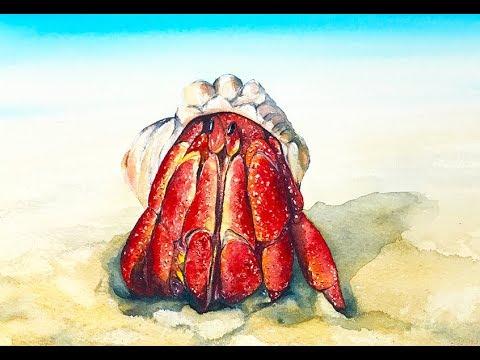 480x360 Hermit Crab Watercolor Painting Tutorial