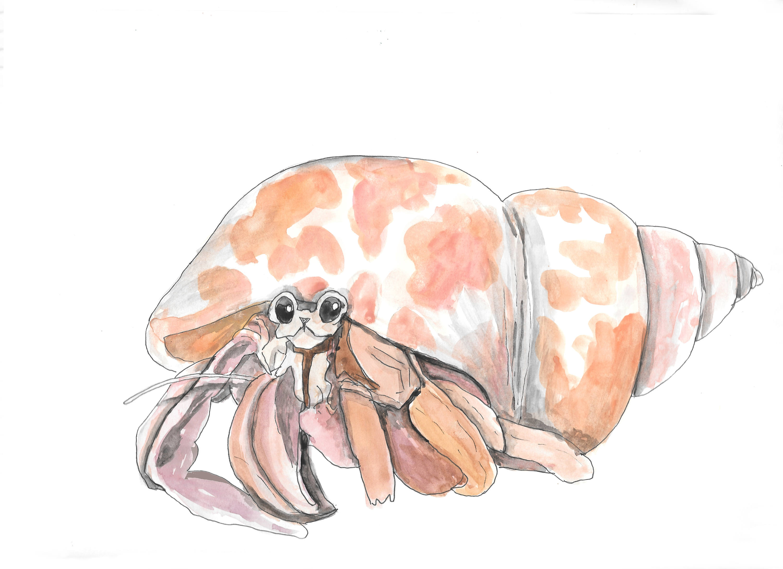 3000x2181 Hermit Crab Hand Drawn Watercolor Illustration Etsy