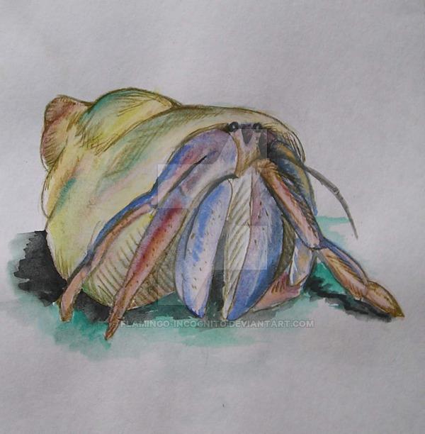 600x612 Hermit Crab Watercolor I By Flamingo Incognito