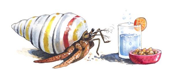 600x265 Terrestrial Hermit Crabs Only Smell Their Favourite Snacks When