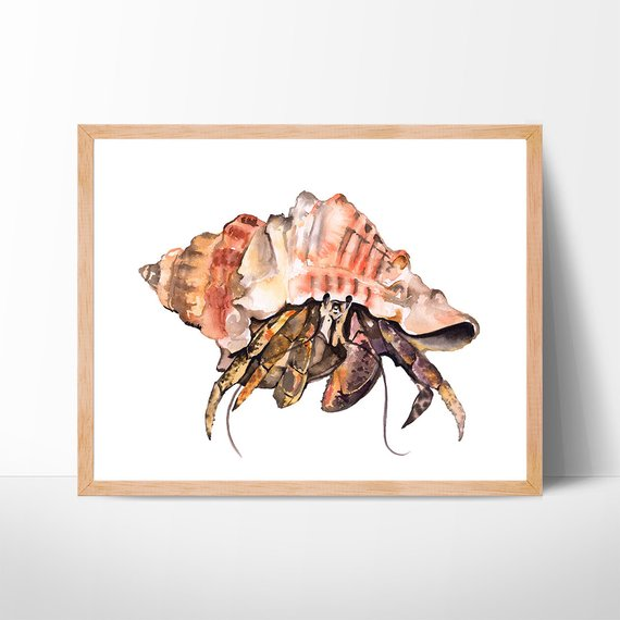 570x570 Hermit Crab Watercolor Art Crab Painting Illustration Beach Etsy