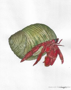 236x300 On Original Watercolor Painting Of A Hermit Crab By Damon Crook
