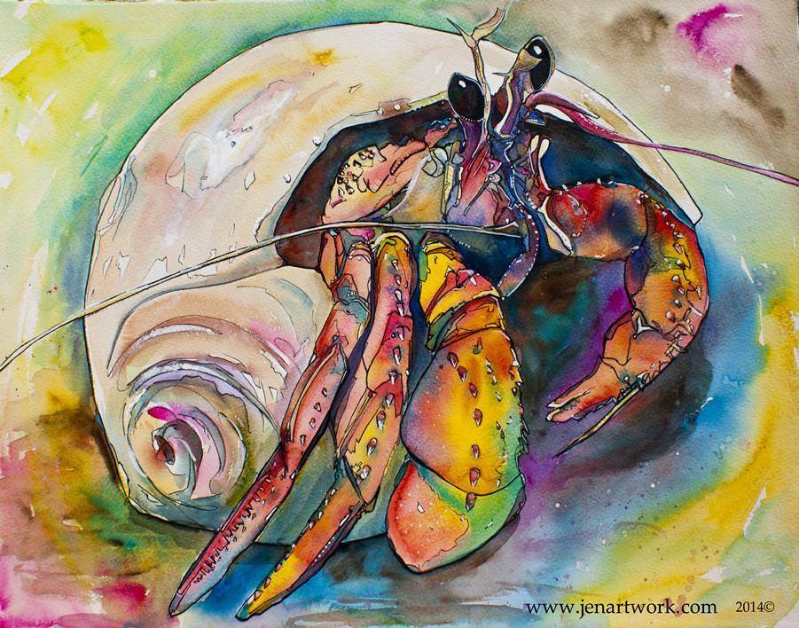 901x708 Hermit Crab