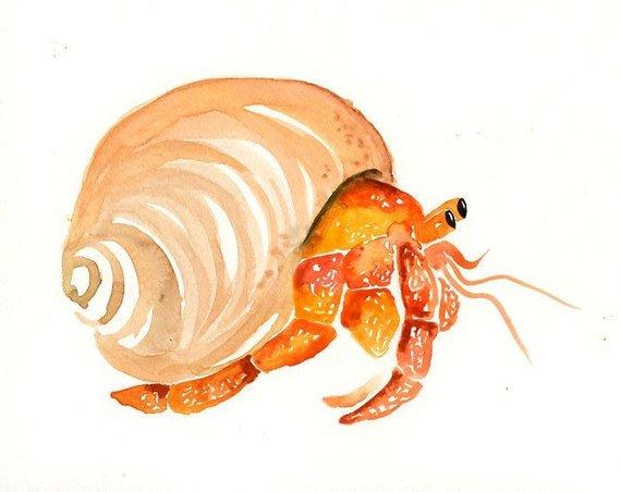 570x452 Hermit Crab 10x8inch Print Art Print Sea Watercolor Etsy