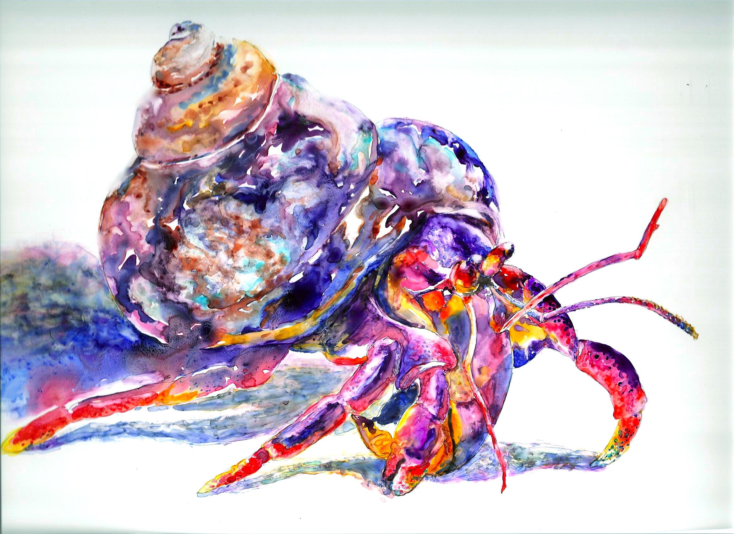 2336x1700 Hermit Crab Trish Hill Bellington