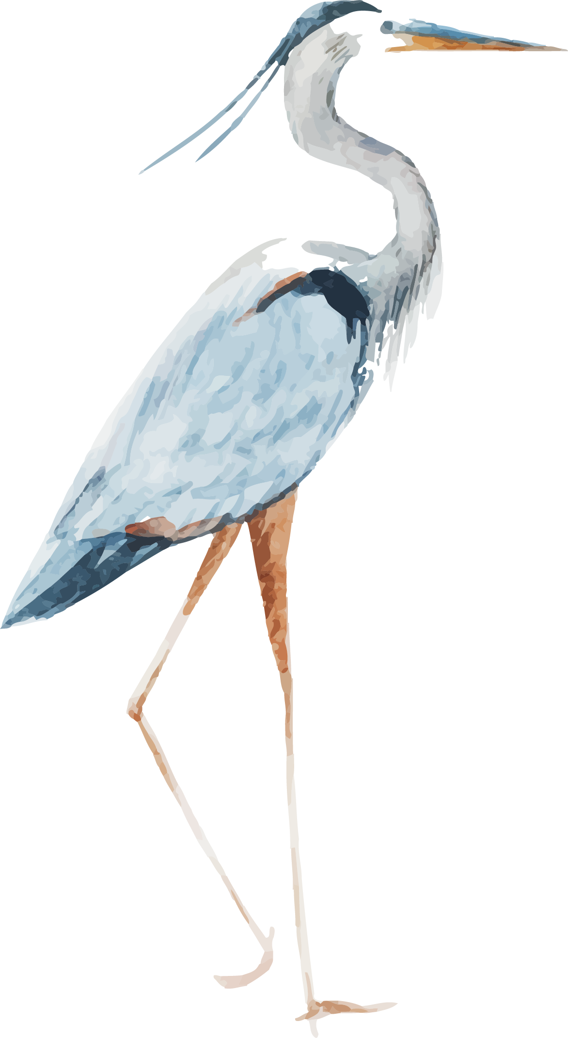 Heron Watercolor