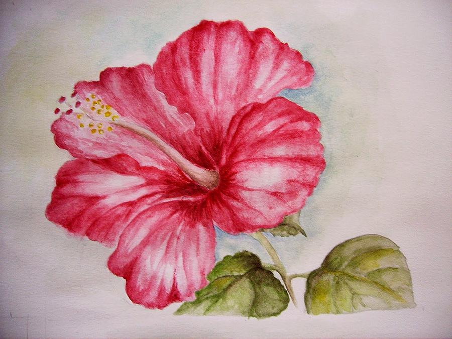 900x675 Hibiscus Flower Painting By Draia Coralia