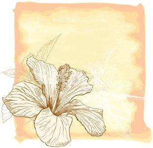 310x300 Hibiscus Flower Amp Watercolor Background Stock Vectors