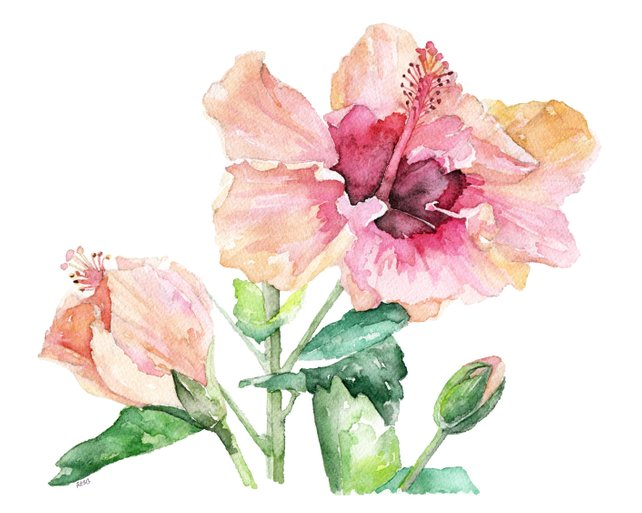 642x513 Hibiscus Painting Print From Original Watercolor Painting Etsy