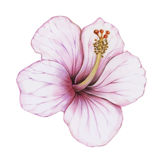 626x626 Illustration Of Hibiscus Flower Watercolor Style Vector Free