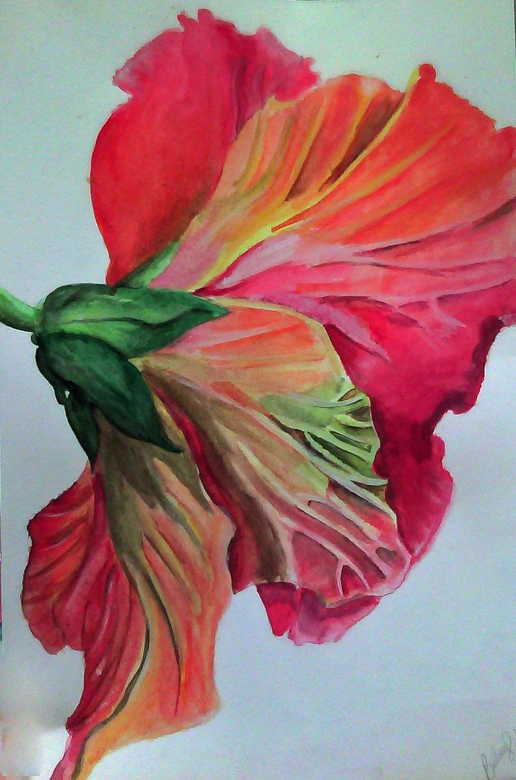 727x1098 Image Result For Hibiscus Flower Watercolor Tattoo Tattoo