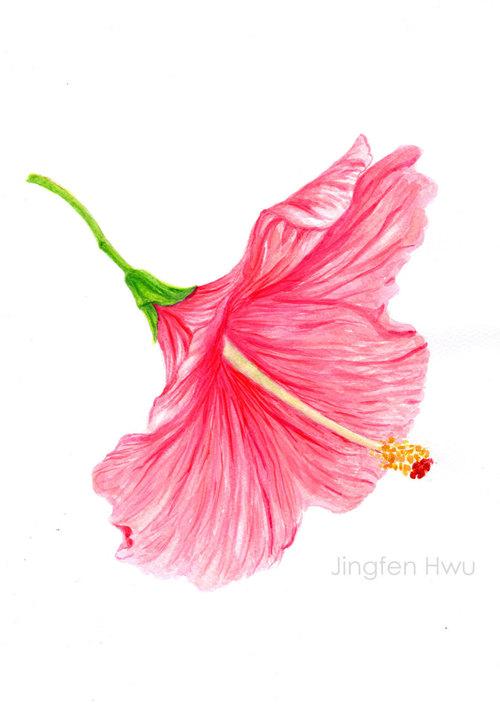 500x707 Ooak Original Artwork Flower Painting A Skirt Like Hibiscus