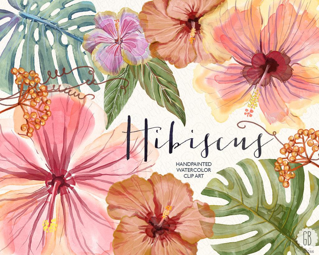 1024x819 Peach Flower Clipart Tropical Hibiscus