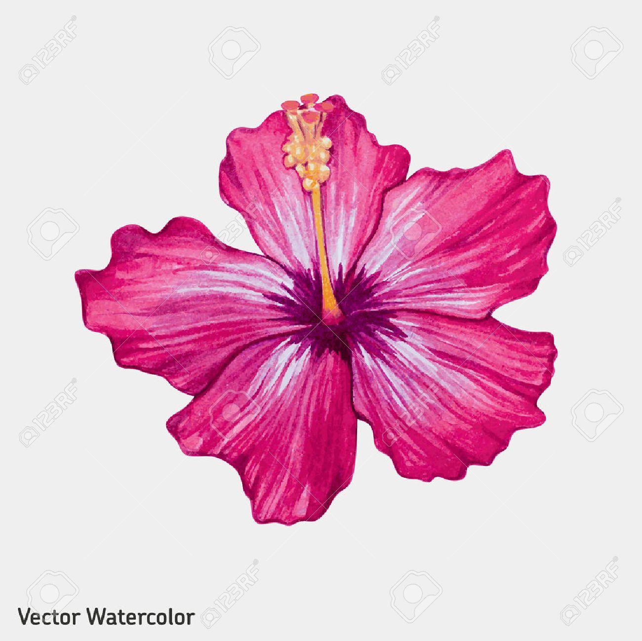 1300x1298 Petunia Clipart Hibiscus Flower