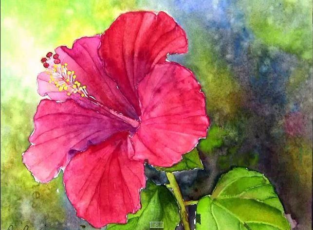 643x473 Pin By Susie Jorik On Watercolor Painting Hibiscus