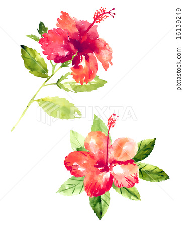364x450 Collection Of Watercolor Hibiscus Flowers