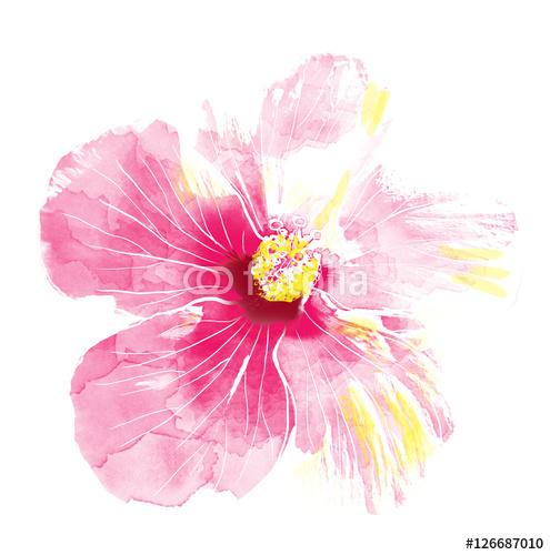 495x500 Pink Hibiscus Flower,watercolor. Wall Mural Wallpaper