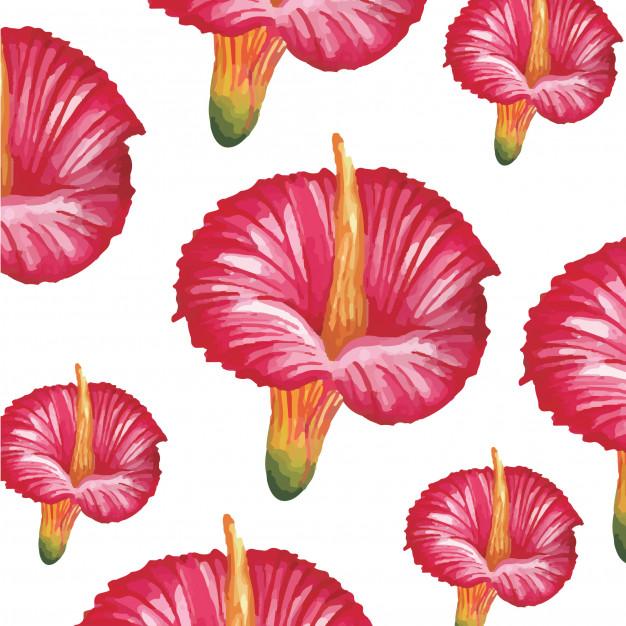 626x626 Red Hibiscus Flower Watercolor Vector Premium Download