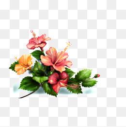 260x261 Watercolor Hibiscus Png Images Vectors And Psd Files Free
