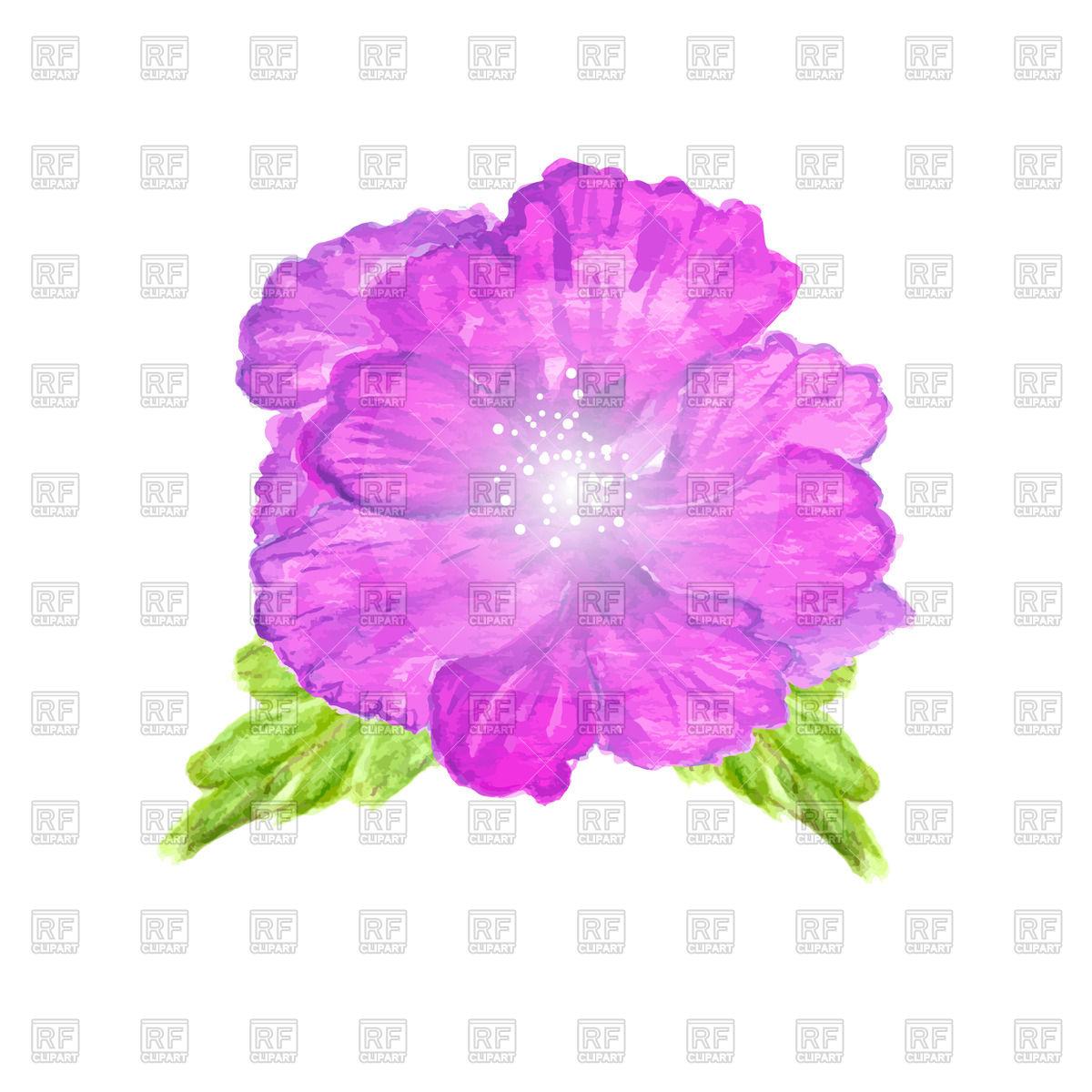 1200x1200 Watercolor Hibiscus Flower Vector Image Vector Artwork Of Plants