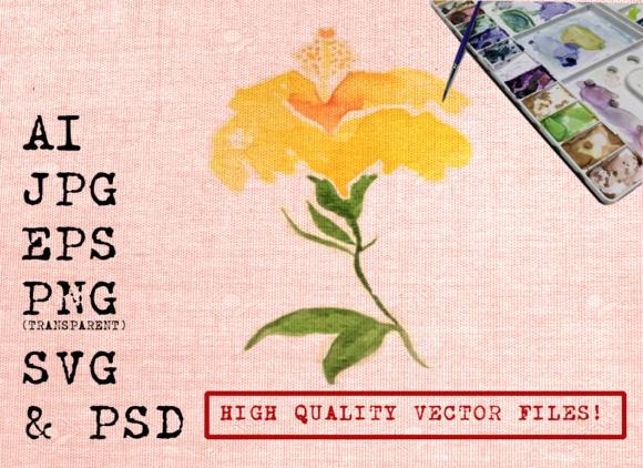 580x422 Yellow Hibiscus Flowers Watercolors Graphic By Ambar Art