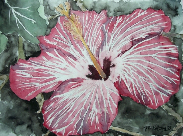 640x478 Derek Mccrea Artwork Hibiscus Flower Watercolor Poster Print