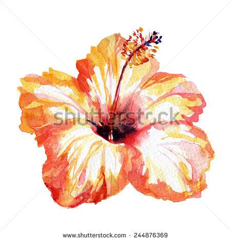 450x470 Gorgeous Hibiscus Flower Orange Red. Watercolor Flower Red