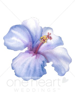 299x388 Hibiscus Clipart Flower Clipart