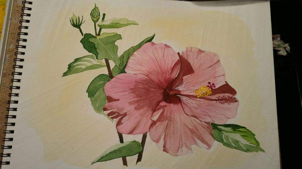1024x576 Hibiscus Watercolor Art Amino
