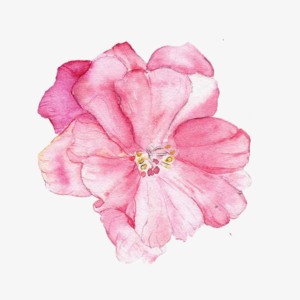 600x600 Painted Pink Hibiscus Water, Water Clipart, Hibiscus, Watercolor
