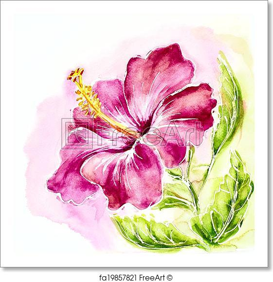 561x581 Free Art Print Of Pink Hibiscus, Watercolor Painting. Freeart